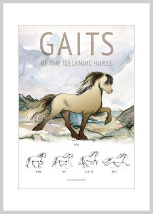 Gaits islandsk gangarter kort i brune nuancer