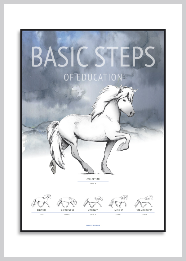 Basic Steps of education of the icelandic horse poster in blue colors
