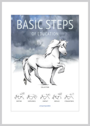 Basic Steps of education of the icelandic horse in blue colors
