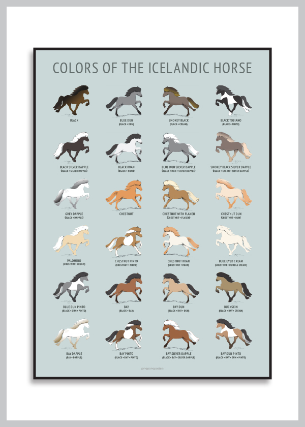 Colors Of The Icelandic Horse poster