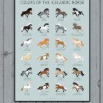 Colors Of The Icelandic Horse plakat på væg
