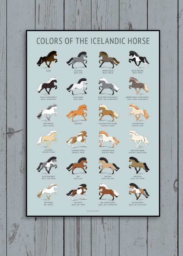 Colors Of The Icelandic Horse plakat på væg