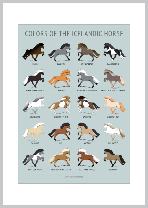 Colors Of the Icelandic Horse card with blue background