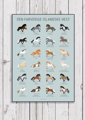 Plakat hænger i stalden der illustrere islænderhestens 24 forskellige farver