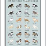 Plakat der illustrere islænderhestens 24 forskellige farve
