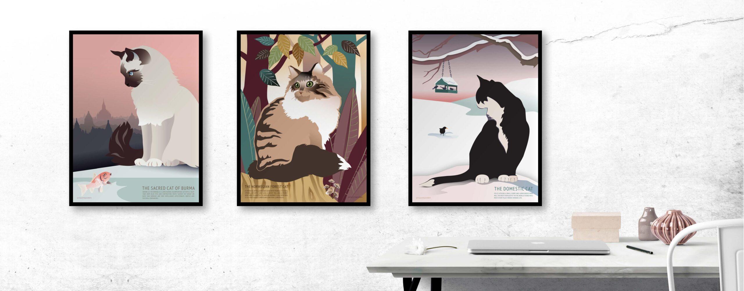 Helligbirma, norsk skovkat og huskatten hænger på vægen i kontoret