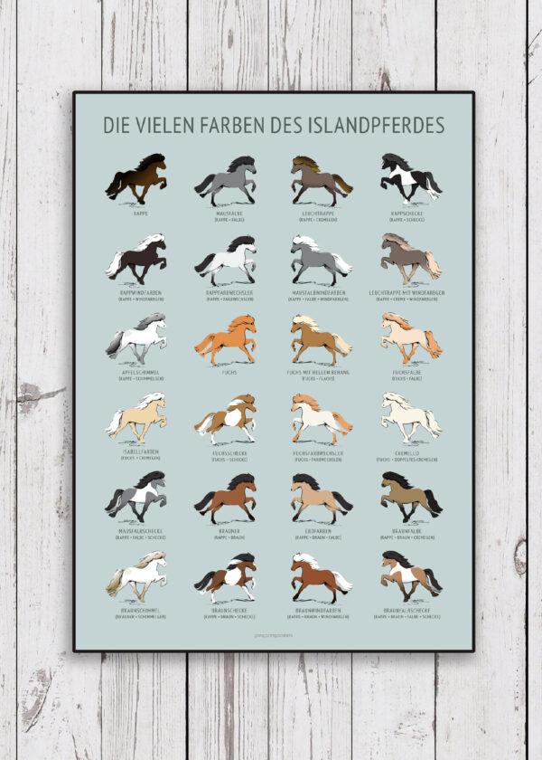Poster mit Die vielen farben des Islandpherdes