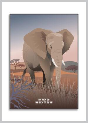 Plakat med afrikansk elefant