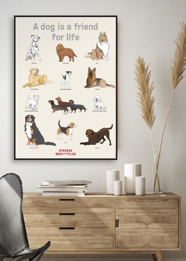 Plakat med 12 hunderacer