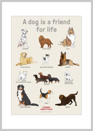 A5 kort med 12 hunderacer