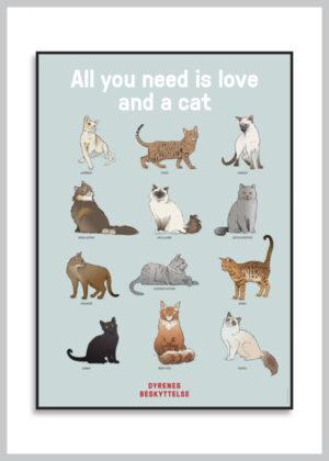 Katteplakat med 12 racekatte